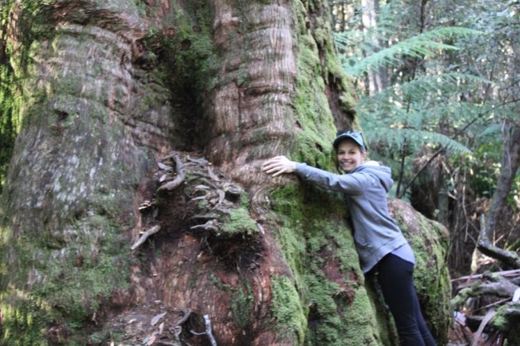 Tree Tasmania