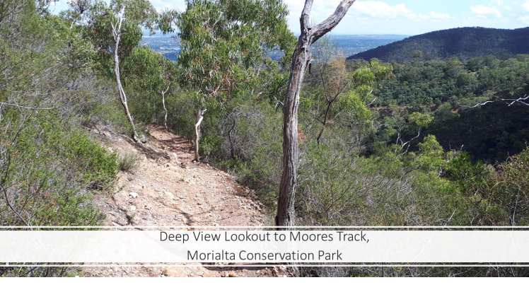 Deep View Lookout to Moores Track, Morialta Conservation Park